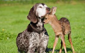 животные, олененок, дружба, Собака