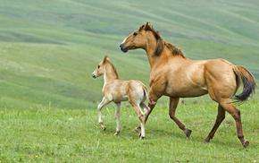 horse, animals, grass