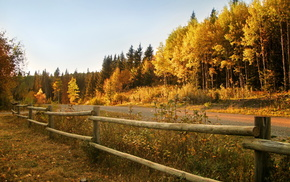 autumn, fence, road, forest