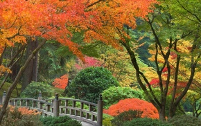 trees, Japan, autumn, park, bushes