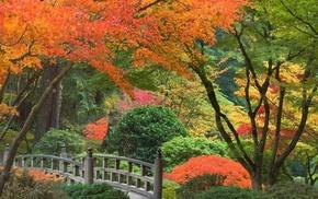 trees, Japan, autumn, park, bushes