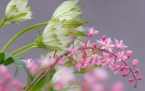 motion blur, branch, flowers