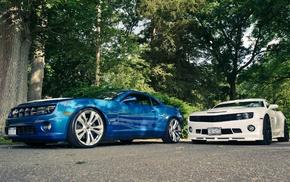 белый, автомобили, синий