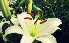 macro, flower, flowers