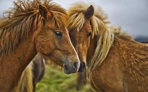 animals, horses