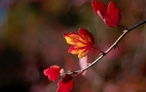 motion blur, macro, leaves, bokeh, autumn