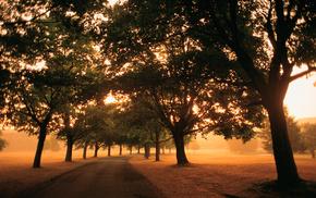 утро, свет, листва, Дорога, поля, деревья
