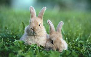 grass, rabbits, glade, animals