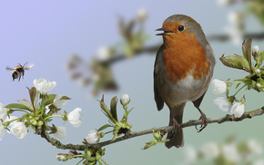 animals, macro, branch, bird, bloom