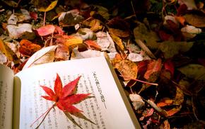 foliage, autumn, book, macro, leaf