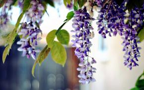 nature, flowers, plants, macro, photo