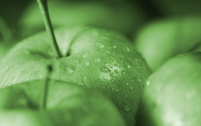 macro, fruit, delicious, apples, drops