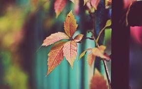 autumn, macro, leaves