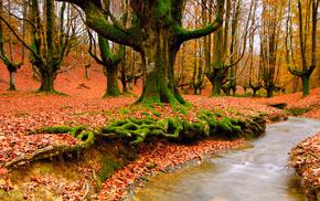 autumn, forest, foliage, nature, creek