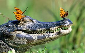 зубы, пасть, бабочки, Крокодил, животные