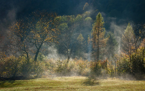 light, mist, nature, autumn, forest