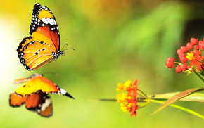 colors, animals, flowers