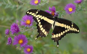 butterfly, yellow, purple, flowers, animals