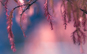 bokeh, pink, macro, leaves