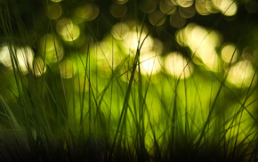 grass, macro, highlights, bokeh