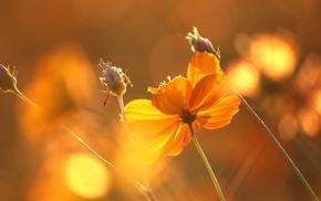 highlights, beautiful, flowers, sunset