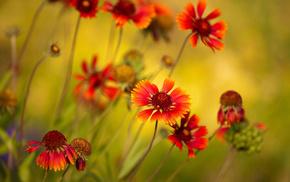 plant, photo, macro, colors, flowers