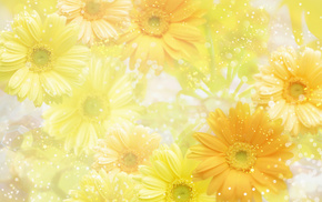 background, yellow, flowers