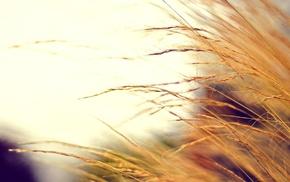 photo, autumn, plant, motion blur, colors