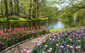 flowers, pond, park, nature