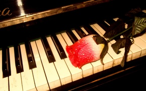 rose, music, piano