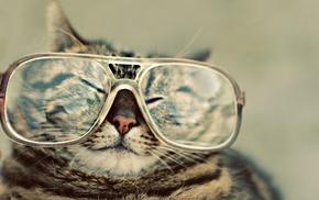glasses, wallpaper, animals, cat
