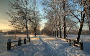 снег, Зима, деревья