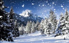winter, nature, macro, snow, snowflakes