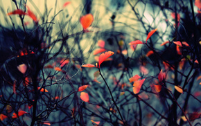 autumn, twigs, nature, foliage