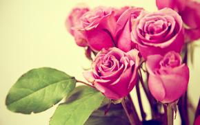 rose, flowers, macro