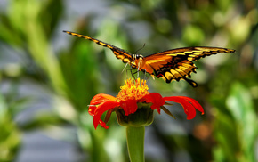 nature, butterfly