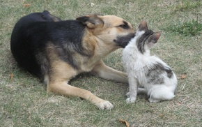 Дружные животные, кот и собака, животные