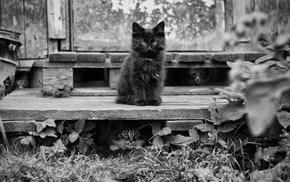 котята, животные, Обои