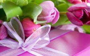 flower, purple, flowers, pink