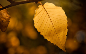 bokeh, autumn, macro, leaf
