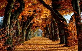 деревья, листья, Осень
