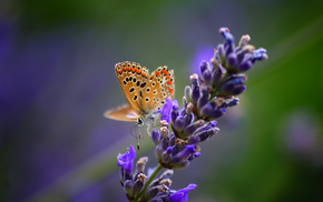 nature, macro, flower, butterfly, plant