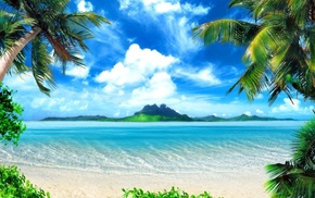 water, nature, beach, sand, palm trees