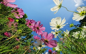 sky, flowers, grass