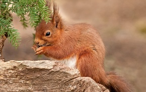 forest, animals, squirrel