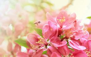 bloom, nature, sakura, spring