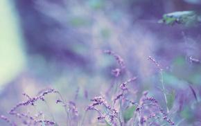 flower, flowers, bokeh