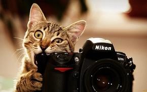 никон, фотограф, животные, бренд