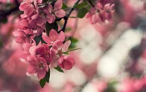 nature, leaves, bokeh, flowers, petals