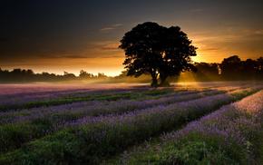 trees, landscape, nature, field, dawn